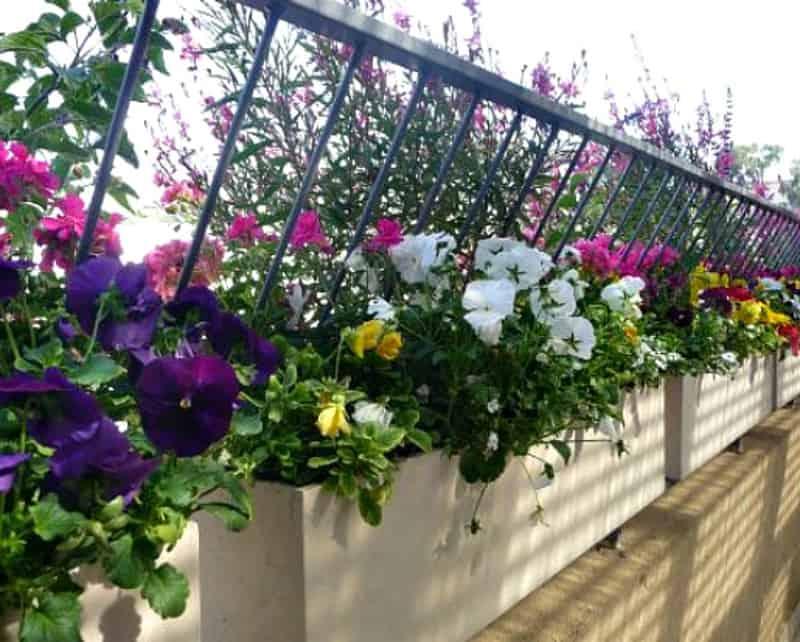 מאוד מדריך: כך תהפכו את המרפסת לגינה פורחת | בניין ודיור HQ-72